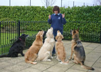 Obedient Dogs